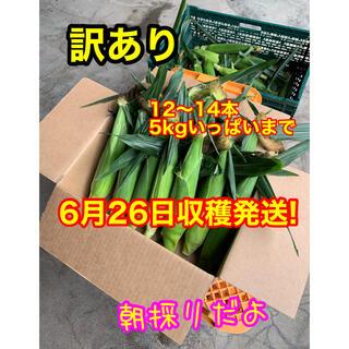 訳あり!6月26日収穫発送!地下水から作った生とうもろこし(野菜)