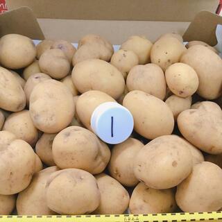 インカのめざめ 新ジャガ無農薬 1、6キロ クロネココンパクトにて(野菜)