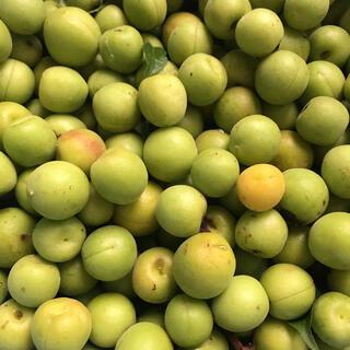 信州産 低農薬 小梅 1キロ(その他)