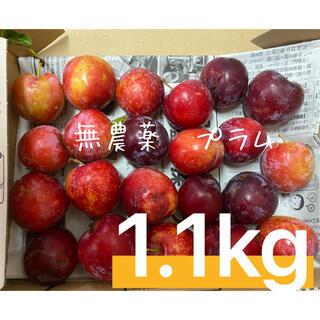 愛知県産 プラム 無農薬 すもも 1.1キロ(フルーツ)