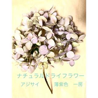 ナチュラルドライフラワー ハイドランジア アジサイ 一房 薄紫色(ドライフラワー)