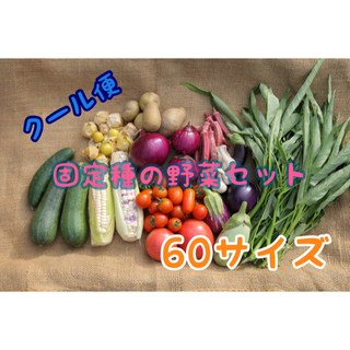 固定種のおまかせ野菜セット 60サイズ クール便(野菜)