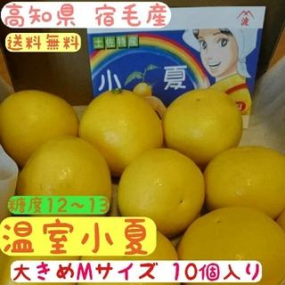 高知県 宿毛産 ハウス小夏 送料無料 糖度13度(フルーツ)