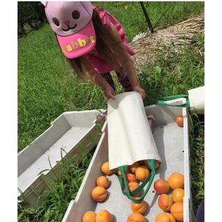 杏1キロ🍑生食可能 即落札可能 着払いにて🙇♂️雹天候被害有り(フルーツ)