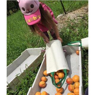杏2キロ🍑生食可能 即落札可能 着払いにて🙇♂️雹天候被害有り(フルーツ)