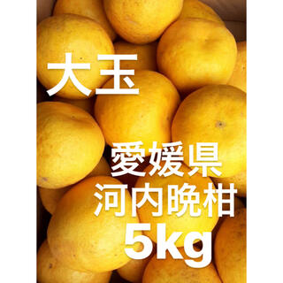 愛媛県 宇和ゴールド 河内晩柑 5kg(フルーツ)