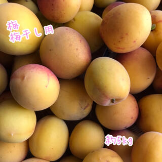 梅 ウメ うめ 箱込み 約1kg 梅干し用などに(フルーツ)