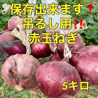 【赤玉ねぎは辛味が少なく、刺激も少ないんだよ!5k入】(野菜)