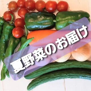 夏のお野菜セット(野菜)