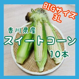 【大きいサイズのみ】スイートコーン10本 白いとうもろこし ホワイト 新鮮野菜(野菜)