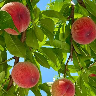 山梨県産桃(フルーツ)