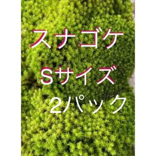 スナゴケ 75(その他)