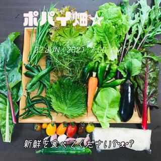 ポパイ畑☆野菜米多種類詰め合わせʕ•ᴥ•ʔ*ネコポスサイズ(野菜)