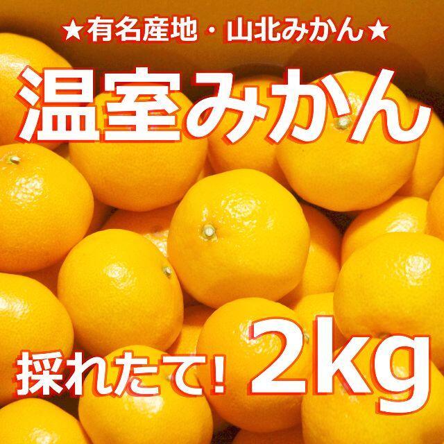 【高級ブランド #温室みかん 2キロ】JA出荷品 #山北みかん #蜜柑 2kg 食品/飲料/酒の食品(フルーツ)の商品写真