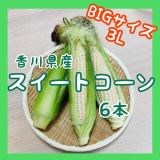 【大きいサイズのみ】スイートコーン6本 白いとうもろこし ホワイト 新鮮野菜(野菜)