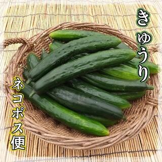 山形県産野菜☆きゅうり(野菜)