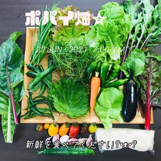 ポパイ畑☆野菜米多種詰め合わせ6/26<土曜発送>*(•ᴥ•)*ネコポスサイズ(野菜)