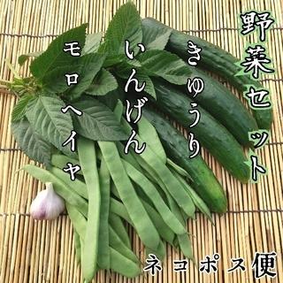 山形県産 野菜セット(野菜)