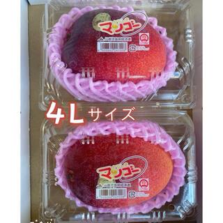 完熟マンゴー 2玉 鹿児島産 秀品 4Lサイズ 約500g 以上 パック入り(フルーツ)