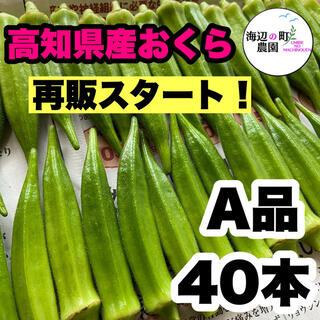 【高知県産オクラ】A品40本 新鮮おくら産地直送 即購入OKです!(野菜)