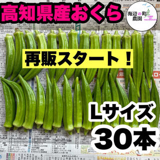 【高知県産オクラ】新鮮おくら 規格外 30本 即購入OKです!(野菜)