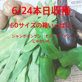夏野菜詰め合わせ 野菜セット ジャンボインゲン(野菜)