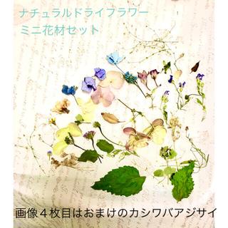 ナチュラルドライフラワー ミニ花材セット おまけつき(ドライフラワー)