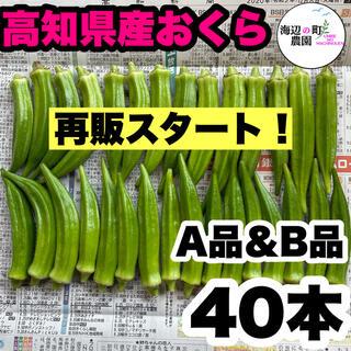 【高知県産オクラ】A品&B品 40本 新鮮おくら産地直送! 即購入OKです。(野菜)