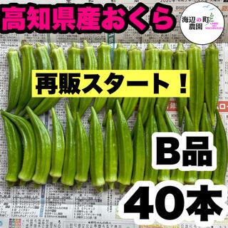 【高知県産オクラ】B品 40本 新鮮おくら産地直送! 即購入OKです。(野菜)