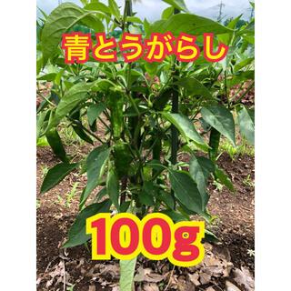 【初物】青唐辛子 青とうがらし 青トウガラシ  激辛 野菜(野菜)