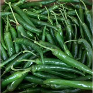 香川産 無農薬 新鮮韓国トウガラシ2キロ 生青唐辛子おまけつき(野菜)