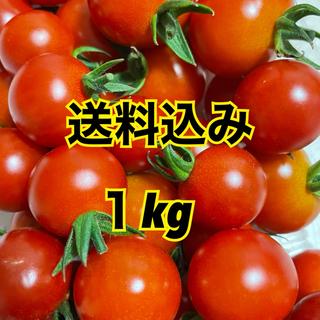 無農薬ミニトマト約1kg(野菜)