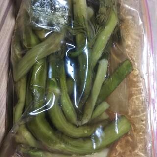 山うど 塩漬け 300g(野菜)