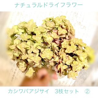ナチュラルドライフラワー カシワバアジサイアジサイ 3枝セット②(ドライフラワー)