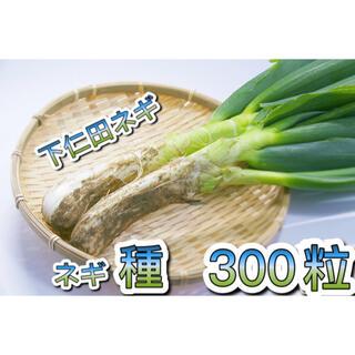 【下仁田ネギ 種】下仁田ねぎ  種 無農薬 新種 約300粒(野菜)