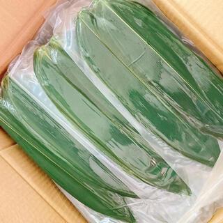 数量限定 中国産 新鮮笹の葉 新鮮粽子葉 真空パック 100枚入*5袋(野菜)