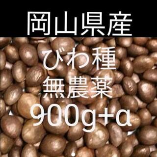 びわの種 無農薬 700g  ビワ  種(フルーツ)