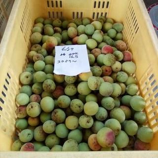 南高梅。大梅15K。自然栽培。広島県産。産直、送込、農家直送、家庭用、サイズ混(フルーツ)