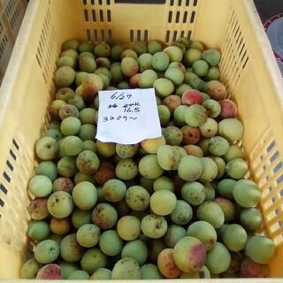 南高梅の大梅15K。自然栽培。広島県産。産直、送込、農家直送、家庭用、サイズ混(フルーツ)