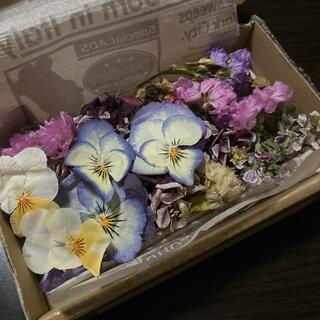 ドライフラワービオラパープルの花々セット(ドライフラワー)