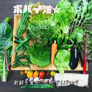 ポパイ畑☆野菜米多種類詰め合わせʕ•ᴥ•ʔ*ネコポスサイズ6/26(土)収穫発送(野菜)