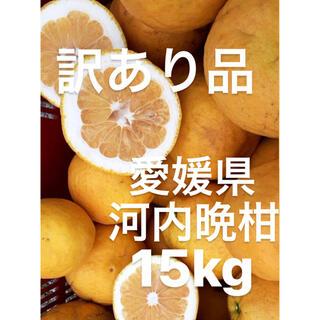 訳あり品 愛媛県 宇和ゴールド 河内晩柑 15kg(フルーツ)