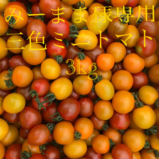 ミニトマト 3kg  みーまま様専用(野菜)