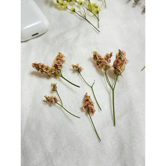 スターチス ドライフラワー ハンドメイド 5種類 5本ずつ ハンドメイドのフラワー/ガーデン(ドライフラワー)の商品写真