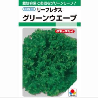 グリーンウェーブ *フリルレタス 種30粒+α(野菜)