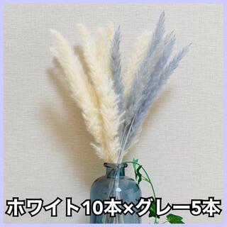 パンパスグラス 白10本 グレー5本 ミックス セット ドライフラワー(ドライフラワー)