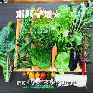 ポパイ畑☆野菜米多種類詰め合わせʕ•ᴥ•ʔ*6/26(土曜)発送ネコポスsize(野菜)
