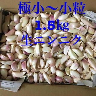 生ニンニク 極小〜小1.5㎏(野菜)