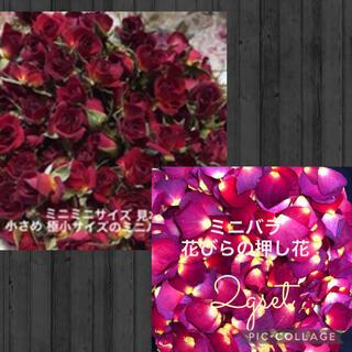 rafu様専用★ミニミニ薔薇20輪セット+おまけ2輪付き&花びらの押し花2g(ドライフラワー)