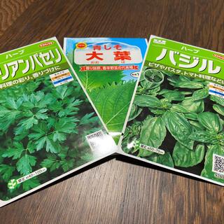 【プランター栽培】大葉50粒、バジル30粒、イタリアンパセリ30粒。お得!!(野菜)